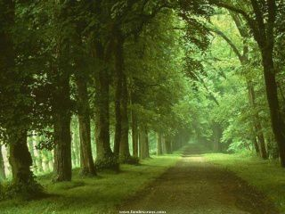 320 Nature Wallpapers-008
