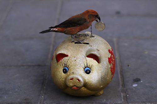 0214-piggy-bank_full_600_large.jpg