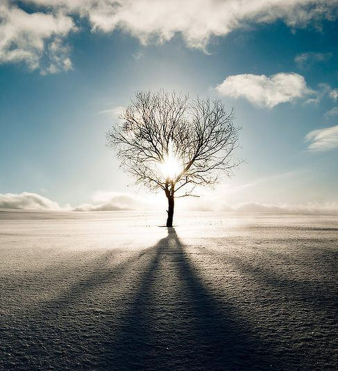 Light of the Tree : Photographer Andrey Ivanov