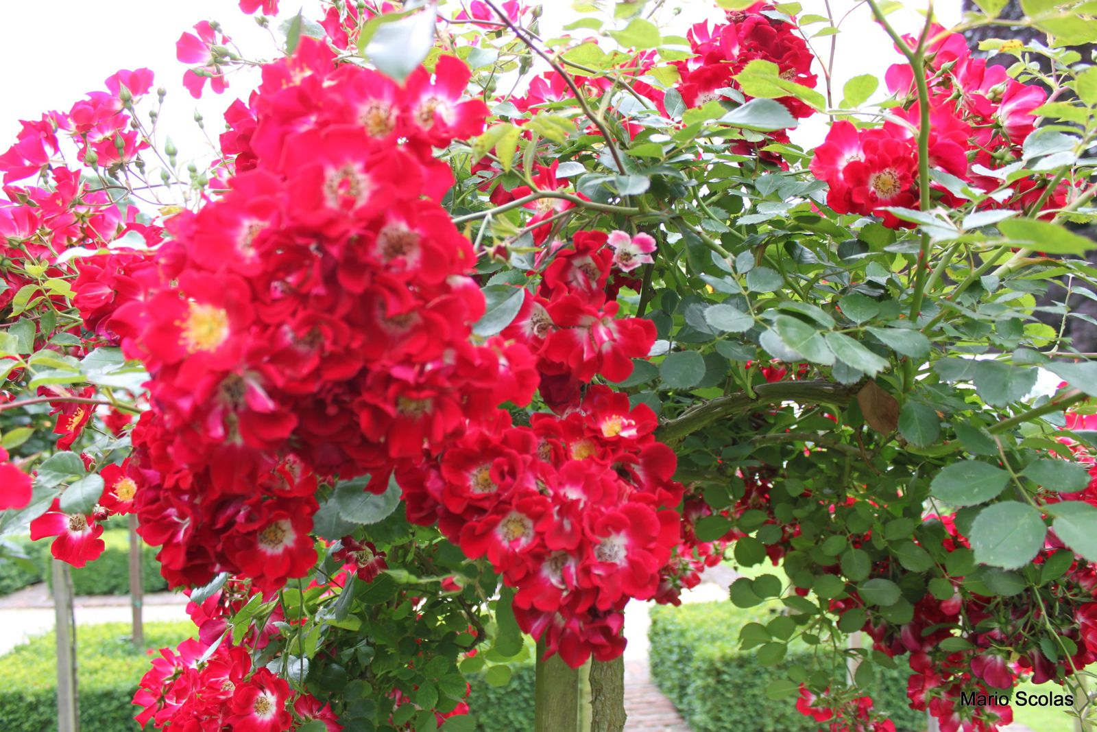 Signification des roses rouges lno for Chiffre 13 signification