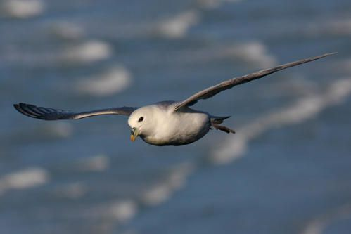 p-trel-fulmar--wimereux--janvier-2008-photo-2-blogg.jpg