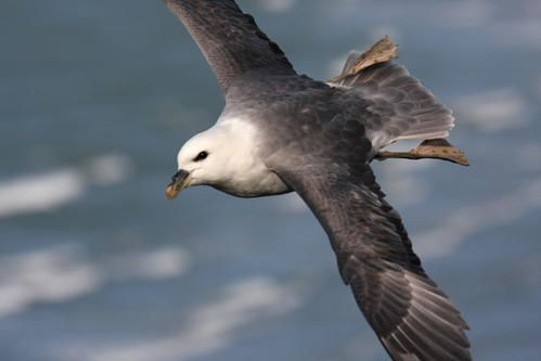 p-trel-fulmar--wimereux--janvier-2008-photo-3-blogg.jpg