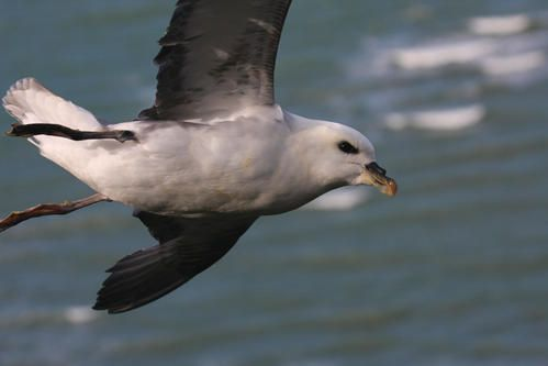 p-trel-fulmar--wimereux--janvier-2008-photo-4-blogg.jpg