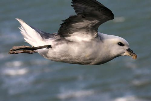 p-trel-fulmar--wimereux--janvier-2008-photo-5-bloog.jpg