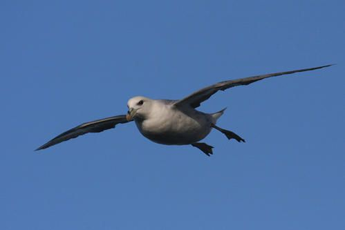 p-trel-fulmar--wimereux--janvier-2008-photo-6-blogg.jpg