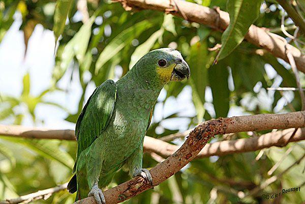 Photos faune de Guyane