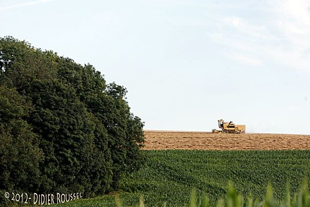 Moisson horizon DxO