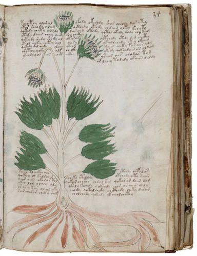 manuscrit-voynich.jpg
