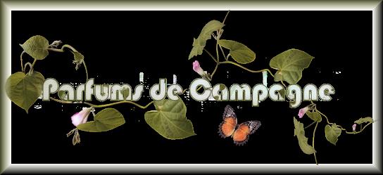 feuilles papillons pdc-copie-1
