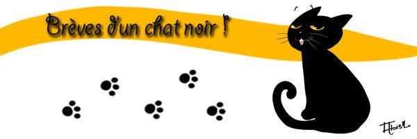breves-d-un-chat-noir-bann.jpg