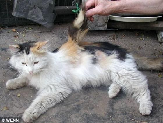 chat-malformation-aile.jpg