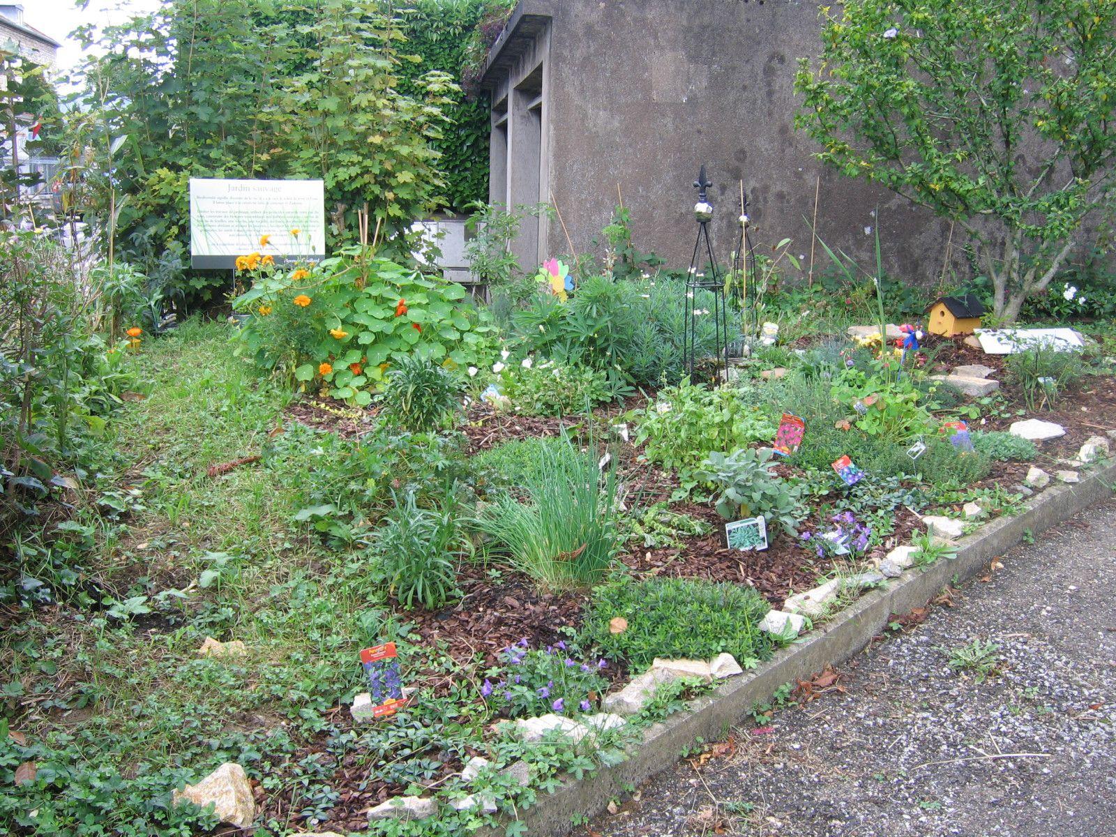 Album le jardin sauvage kin siologie besan on for Jardin sauvage