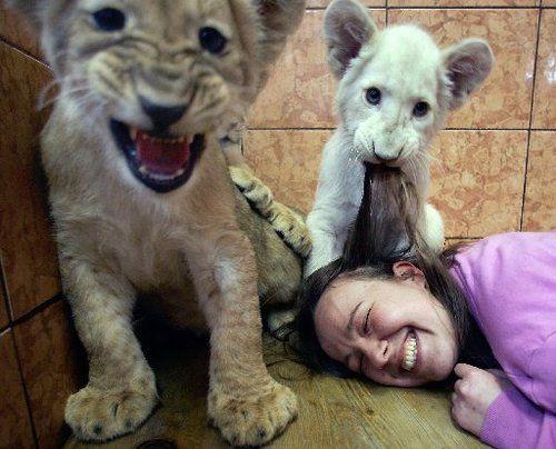 Un petit lion blanc joue avec la gardienne de zoo