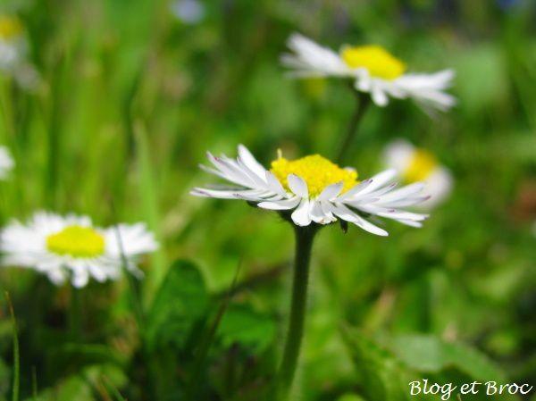 Fleurs et Cie 160