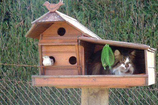 08-insolite-chat-animaux-ai-chez-880177-insolite-magazine-2