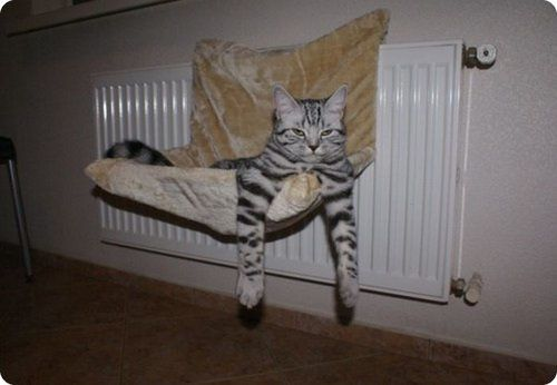 chat_relax_026.jpg