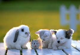 lapin-hamster-chat-chien.jpg
