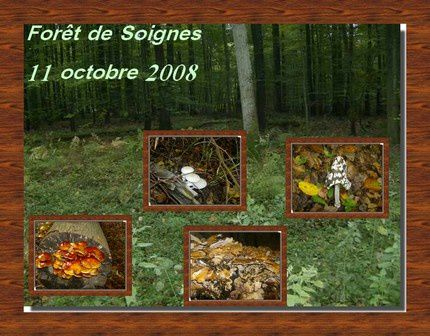 protection_nature_Soignes