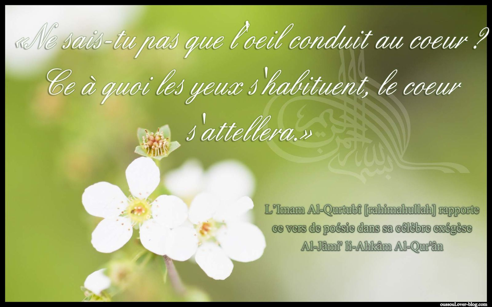 Album Bouquet De Sagesses Rappel Citation Oussoul Aqida