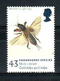 Album - balades entomologiques