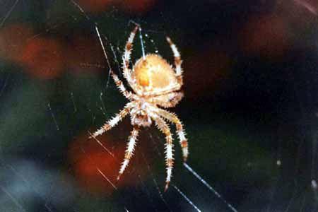 Arachnides/chrono852
