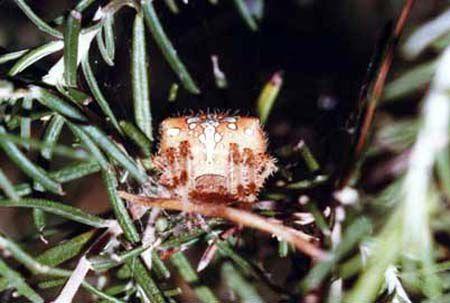 Arachnides/chrono868_1.