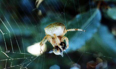 Arachnides/chrono870_1.