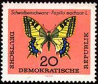 Papilio-machaon/chrono145_1
