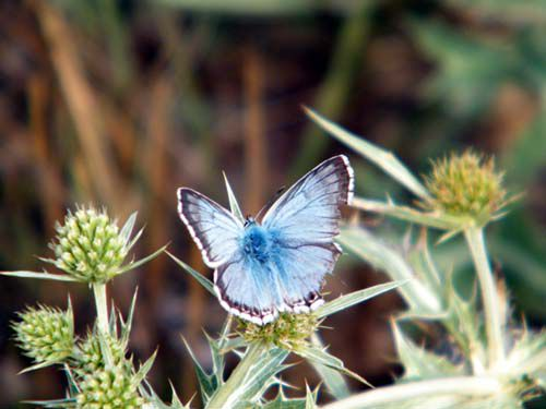 /Papillons/chrono1265_1