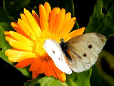 Papillons/chrono1846_1.