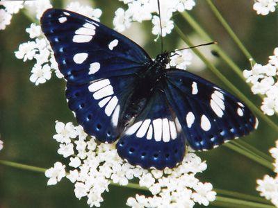 Papillons/chrono898_1