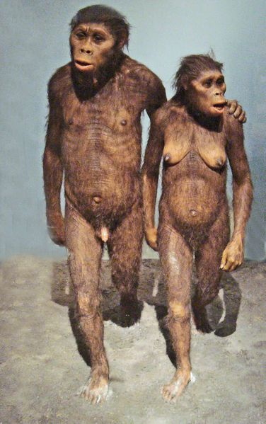 australopitheques.jpg