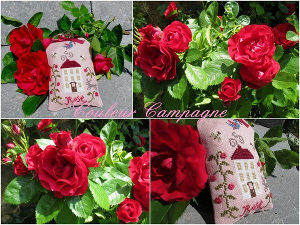rose-copie-1
