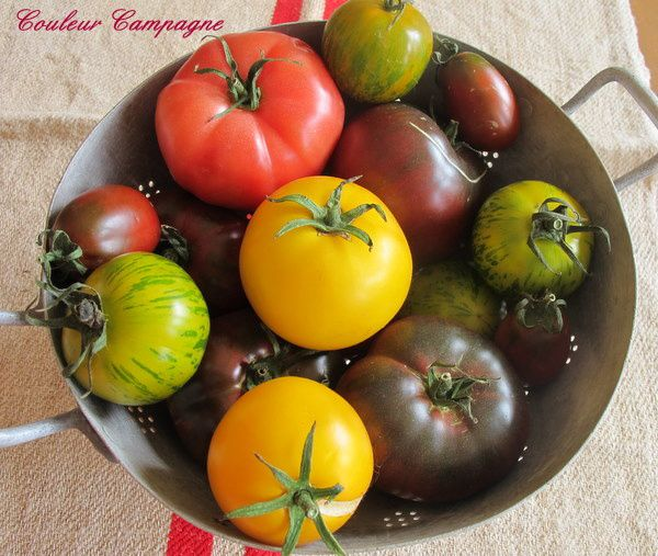 tomate3