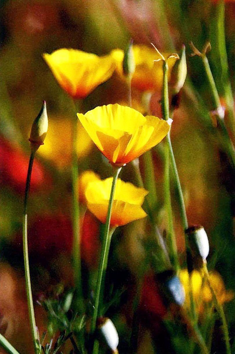 Fleur-Narada.JPG