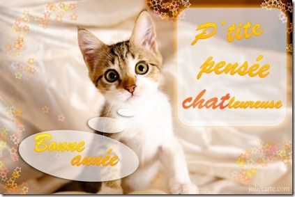 chat-voeux