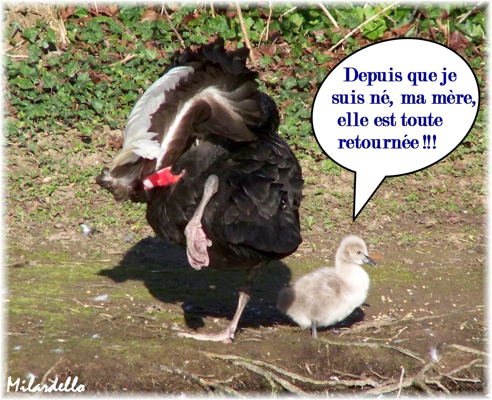 Souvent Album - HUMOUR-ANIMAUX - Le blog de milardello GJ36