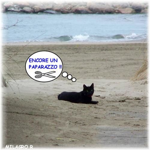 chat divers  Rm-pb-chat-a-la-plage