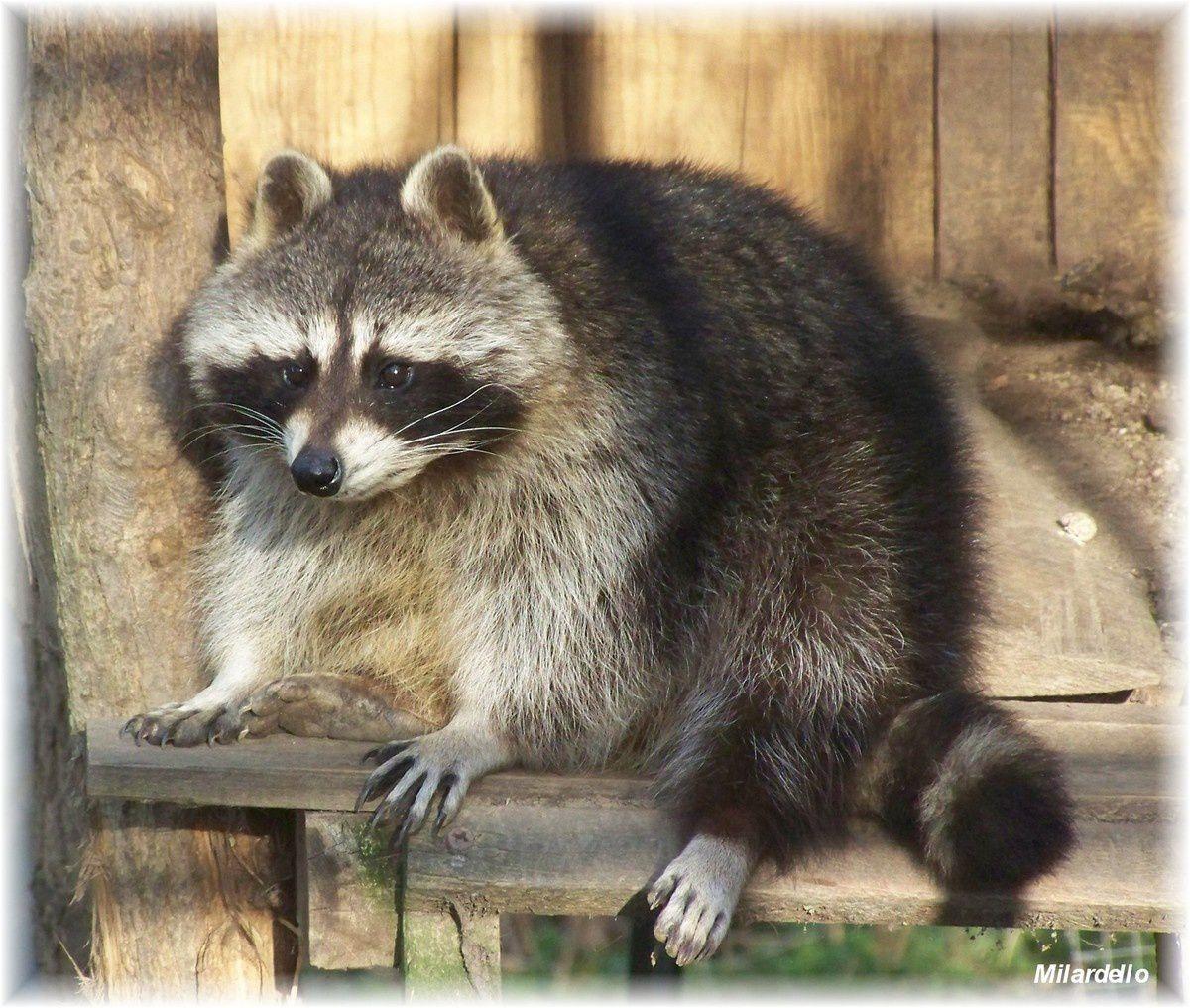 PORTRAIT PHOTO ANIMAL: Animaux photographiés de près.
