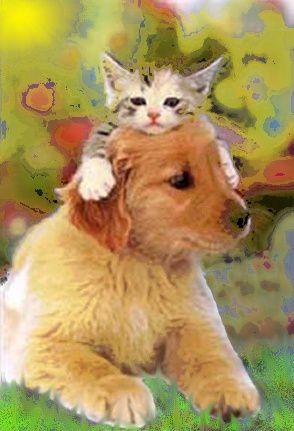 chaton-sur-chien
