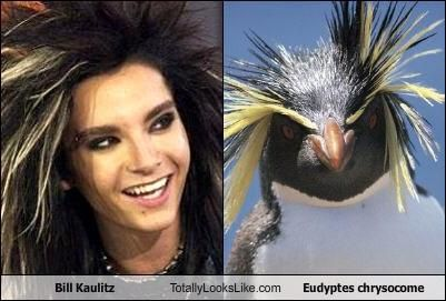 bill-kaulitz-totally-looks-like-eudyptes-chrysocome