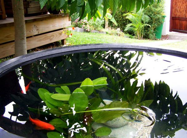 Awesome vasque jardin aquatique pictures awesome - Mini jardin aquatique ...