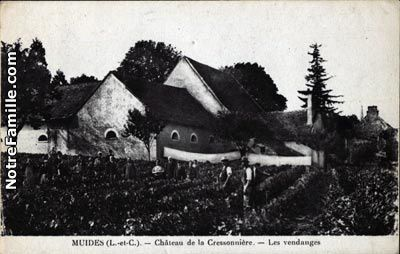 Vendanges-cressoniere-copie-1.jpg