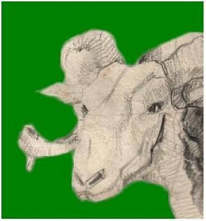 Pin mouton tete de front portrait 540jpg on pinterest - Dessin tete de mouton ...