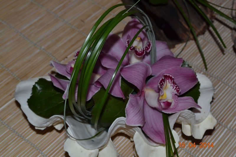 ORCHIDEES-MERLIMONT 0028