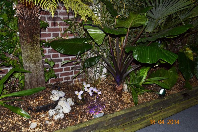 ORCHIDEES-MERLIMONT 0034