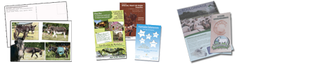 Documents promotionnels : cartes postales, calendriers, flyers ...