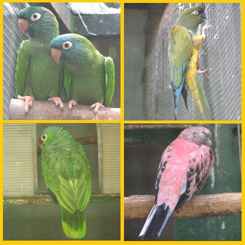 Parc Ornithologique de Bretagne Bruz Rennes