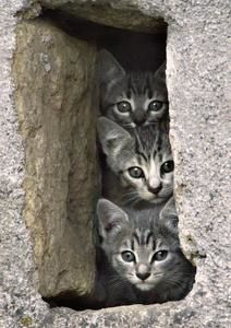 animaux-insolites-chatons-florac-france-