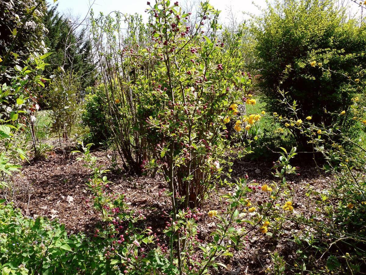 Au jardin de Marithé semaine 49/2011